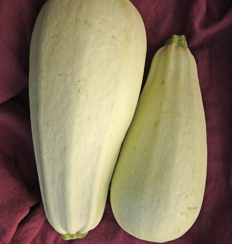Marrow Squash Seeds