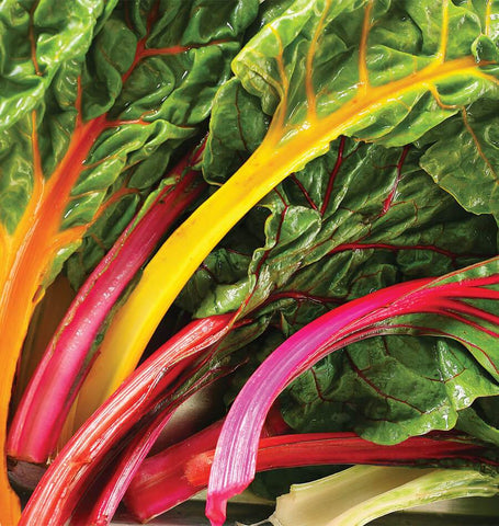 Celebration Swiss Chard Blend