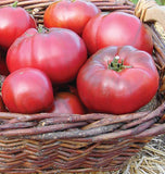 Black Krim Organic tomato seeds TM794 4