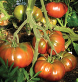Black Krim Organic tomato seeds TM794 2