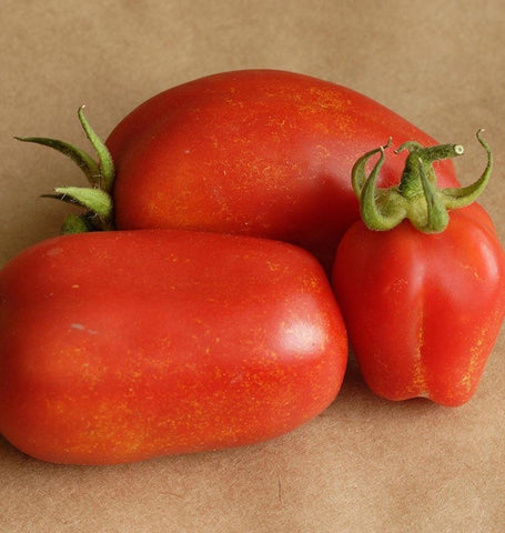 Super Italian Paste Roma Tomato Seeds TM802 1