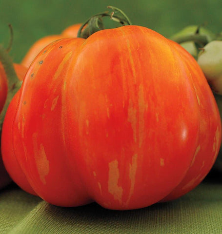 Vintage Wine Tomato Seeds TM807