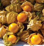 Aunt Molly's Ground Cherry Seeds TM809-1