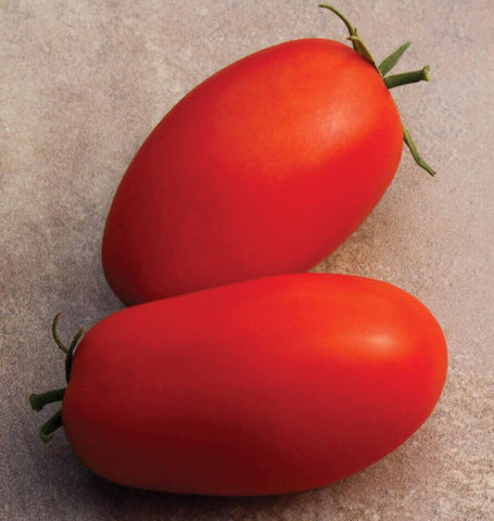 Supremo Tomato Seeds TM829