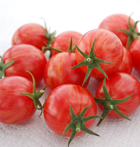 Pink Bumble Bee Organic Tomato Seeds