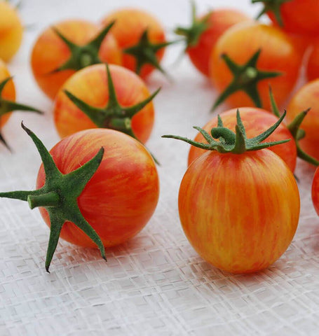 Sunrise Bumble Bee Organic Tomato Seeds