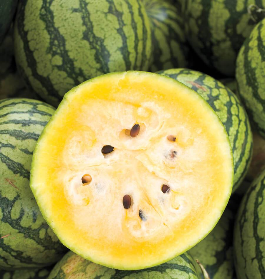 Yellow Doll Watermelon Seeds West Coast Seeds