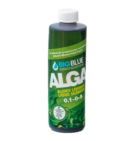 Big Blue Alga
