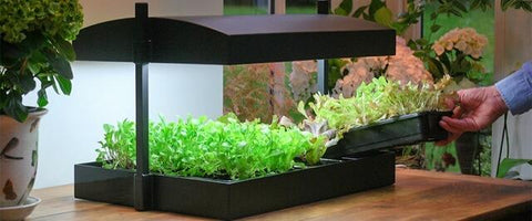 LED Growlight Garden