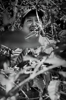 Woman in the coffee fields
