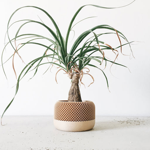 Apple Indoor Planter by Minimum design