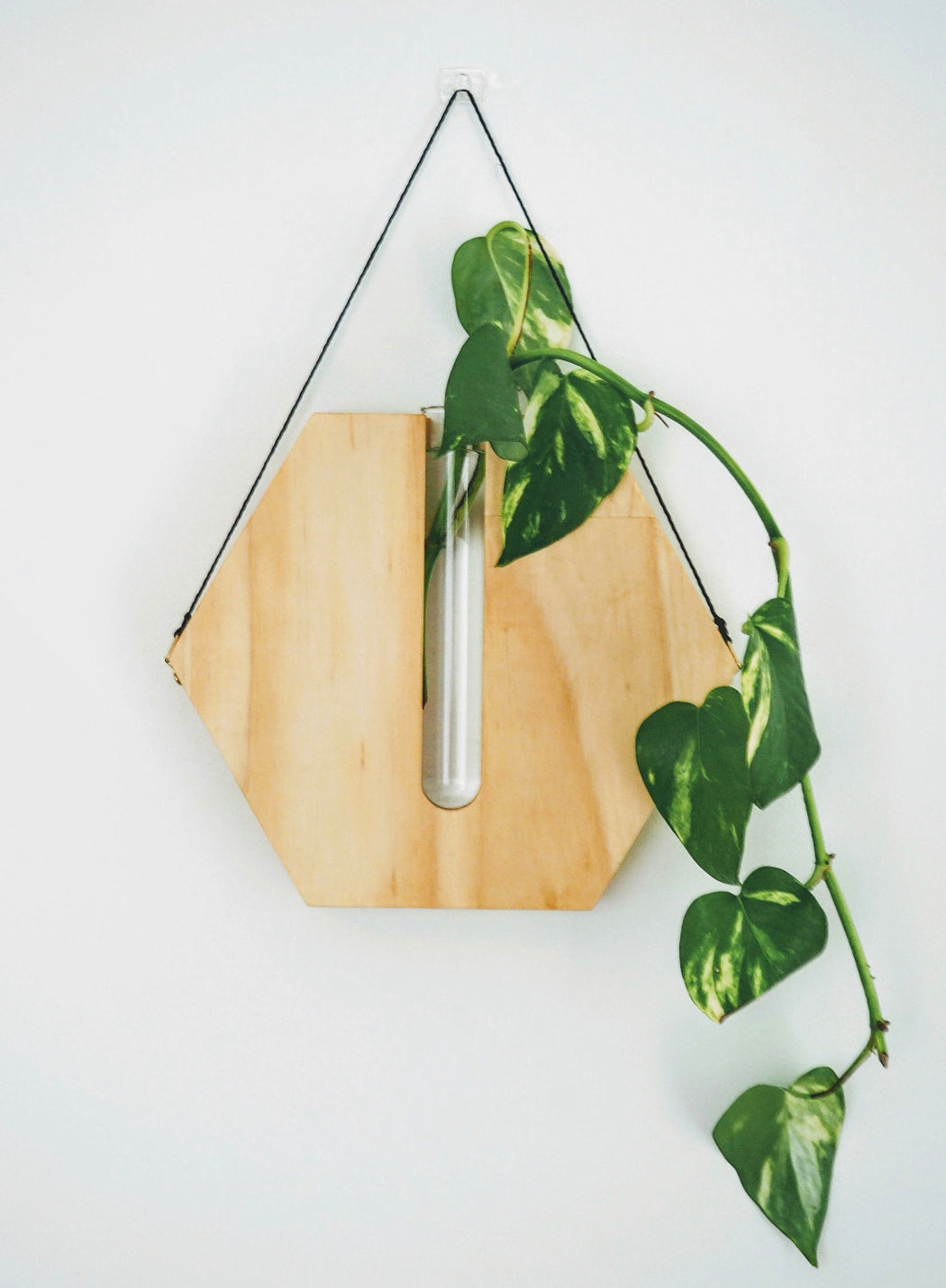 Timber wall hanger - Honeycomb, Natural