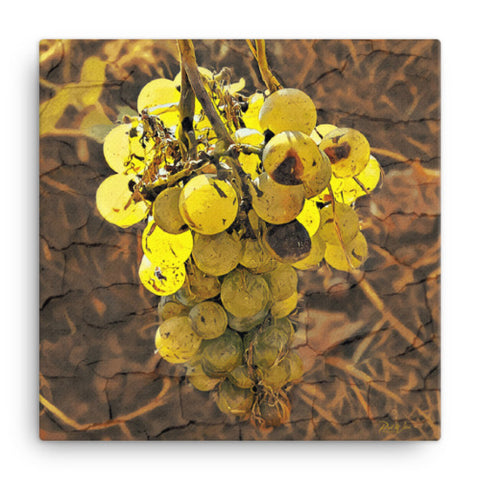 Abstract Grapes on the Vine Canvas Wall Art