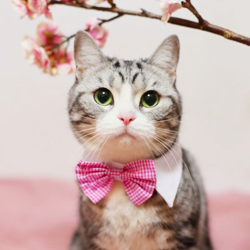 [MPK Store] Cat Bow Tie in Various Designs, Cats and Dogs Collar Pet Bow Tie