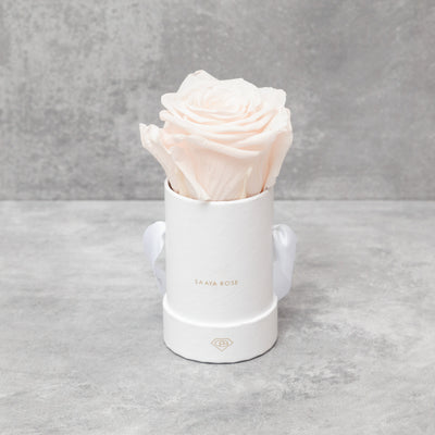 Single Rose Box - Aashi Beauty