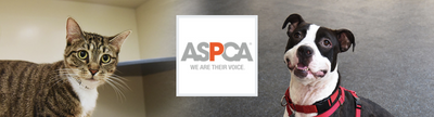 Donate to the ASPCA Foundation - Aashi Beauty