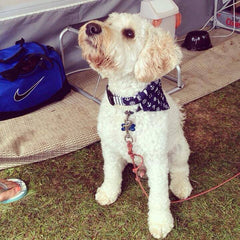 Top Pooch | Handmade Dog Collars | Fabric Dog Collars