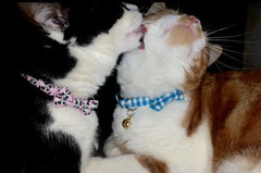 Cat Bow Collar | Handmade Dog Collars | Fabric Dog Collars