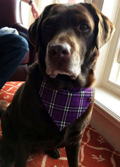 Handmade Dog Collars | Fabric Dog Collars | Tartan Dog Collar
