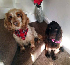 Tartan Dog Collar | Handmade Dog Collars | Fabric Dog Collars
