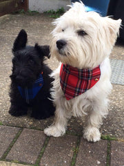 Top Pooch | Handmade Dog Collars | Fabric Dog Collars | Tartan Dog Collar