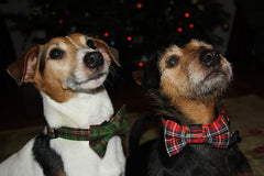 Tartan Christmas Dog Collar | Handmade Dog Collars | Fabric Dog Collars