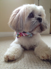 Handmade Dog Collars | Fabric Dog Collars | Floral Dog Collar