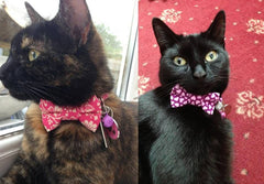 Cat Bow Tie | Handmade Dog Collars | Fabric Dog Collars