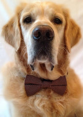 Dog Bow Tie | Handmade Dog Collars | Fabric Dog Collars