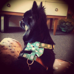 Dog Harness | Handmade Dog Collars | Fabric Dog Collars