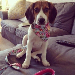 handmade dog collar | fabric dog collar | dog bow tie