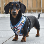 Superhero Dog Harness