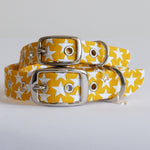 Yellow Stars Buckle Dog Collar
