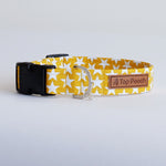 Yellow Stars Dog Collar