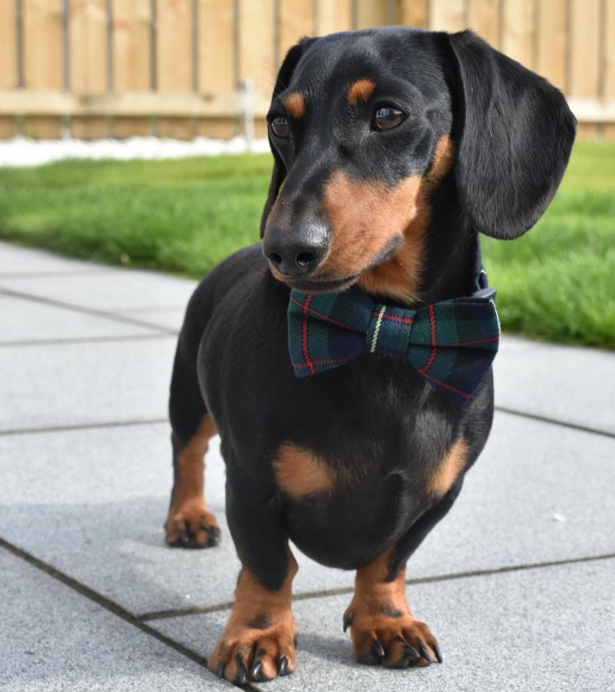 Forest Dog Bow Tie