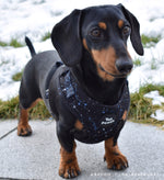 Constellations Harness