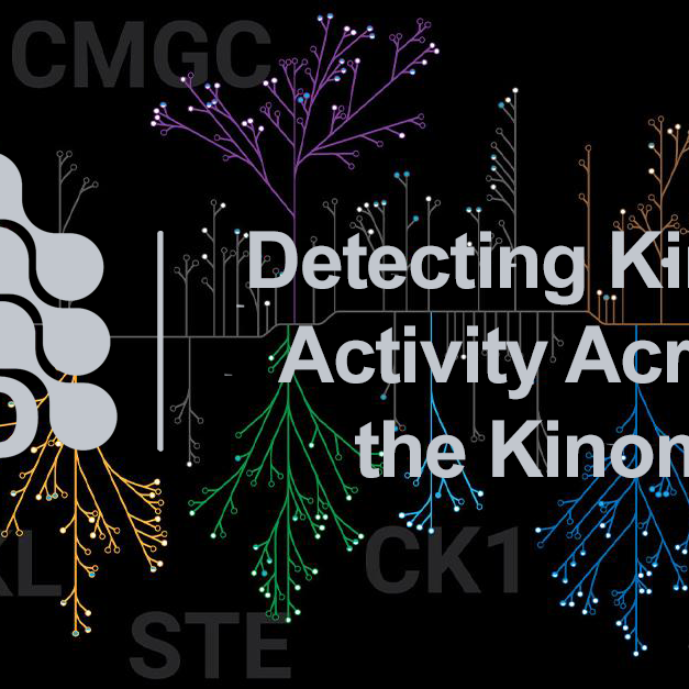 Detecting Kinase Activity Across the Kinome