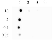 3-Methylcytosine (3-mC) antibody (pAb), sample