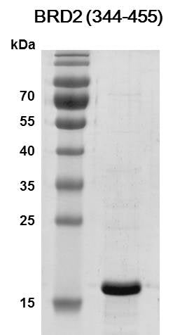Recombinant BRD2 (344-455) protein