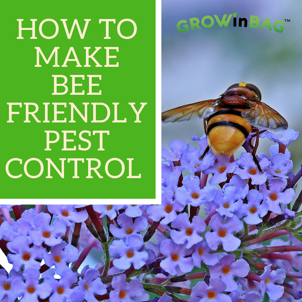 How to make bee friendly pest control.