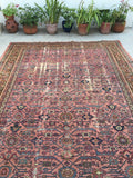 10'3 x 14'4 Persian Mahal in Blush Rug (#988)