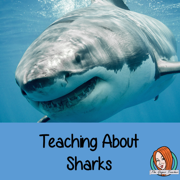 Teaching About Sharks