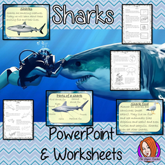 lessons-about-sharks