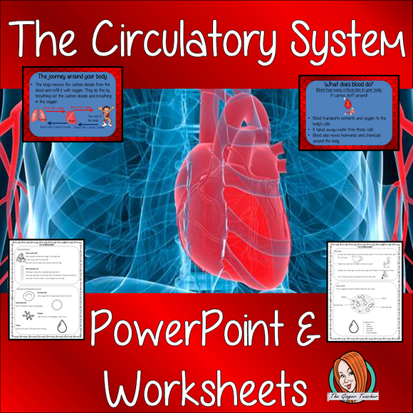 Blood and the Circulatory System  -  PowerPoint and Worksheets