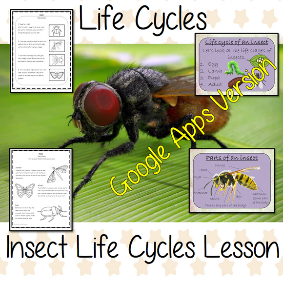 Distance Learning Insect Life Cycles Google Slides Lesson   This is a complete lesson on the life cycles of insects.  Part of my Life Cycles of Animals unit of work. Teach kids about the insect stages of life. This resource is a complete lesson on the stages of insects' life cycle, how they are classified, and the different types of insects and discusses the exoskeleton. There is a presentation and student activities included to assist learning and encourage ideas in children and teachers.  This is the Goog