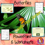 Distance Learning Butterflies Complete Google Slides Lesson  This download teaches children about Butterflies. There is a detailed 23 slide presentation on the life cycle of butterflies, details about the transformation from caterpillar to butterfly, information about how they eat, a look at some of the different types of butterflies and a brief look at the parts of a butterfly. There are also differentiated, 4 page, Butterflies Google Slides worksheets to allow children to demonstrate their understanding.
