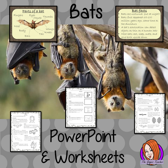 Bats PowerPoint and Worksheets This teaches children about bats in one complete lesson. There is a detailed 56 slide PowerPoint on where bats live, cute bat facts, details about the how they spend their year, information about how they eat, a look at different types of bats and the parts of a bat. There are also differentiated, 8 page, worksheets to allow students to demonstrate their understanding. This pack is great for teaching kids all about bats.  #teaching #bats #science