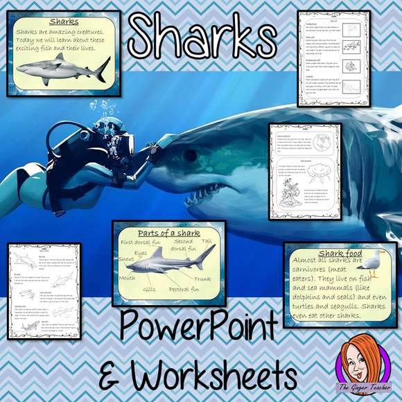 Kids love sharks! This download teaches students about sharks. All you need for your lesson plans are in this download. There is a fun, detailed 58 slide PowerPoint on the where sharks live, details and facts about the how they spend their time, information about how they hunt and eat, a look at the different types of sharks and a brief look at the parts of a shark. There are also differentiated, 8 page, worksheets to allow children to demonstrate their understanding and assist their learning.