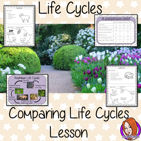 Comparing Life Cycles  - Complete Science Lesson This download is a complete lesson on teaching the comparison of animal life cycles.  This lesson uses a 23 slide PowerPoint to teach children about comparing animals and mammals. The lesson activities teach the class by completing a comparison chart and information sheets to consolidate knowledge for kids to complete with lesson information and ideas. #lifecycles #students #learning #animals #mammals
