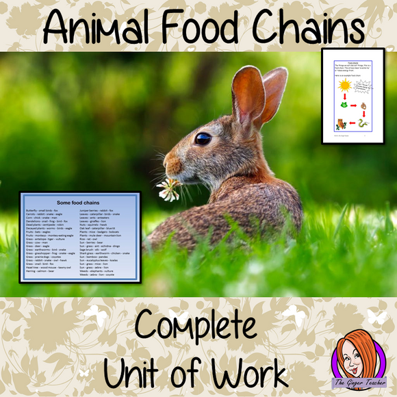 Science - Animals, Food Chains Complete Unit of Lessons